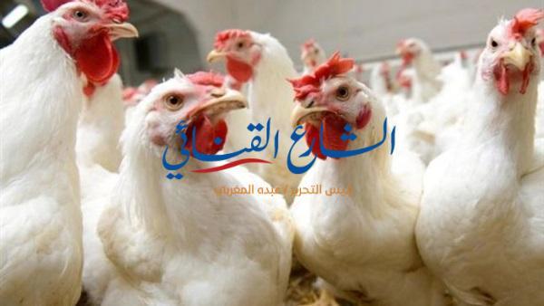 aljornal.com - الجورنال - ارتفاع أسعار الطيور بأسواق قوص – الشارع القنائي