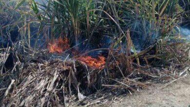 Photo of السيطرة على حريق في فدان قصب بابوتشت