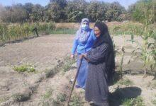 "Photo of ""غنية"" امرأة قوصية .. 50 سنة في الزراعة ولديها 12 من الأبناء "" الغنى في الرضا"".. صور"