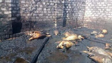 Photo of السيطرة على حريق نشب في 3 أحواش بقرية الدير بفرشوط