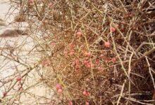 Photo of بالصدفة.. أثري يكتشف نباتات نادرة بنجع حمادي ويناشد الجامعة بالتحقق منها في قنا (خاص)